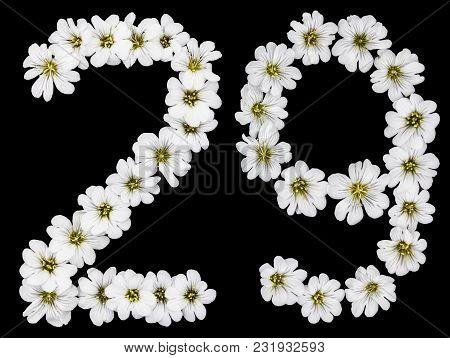Arabic Numeral 29, Twenty Nine, Twenty, Two, Nine, From White Flowers Of Cerastium Tomentosum, Isola