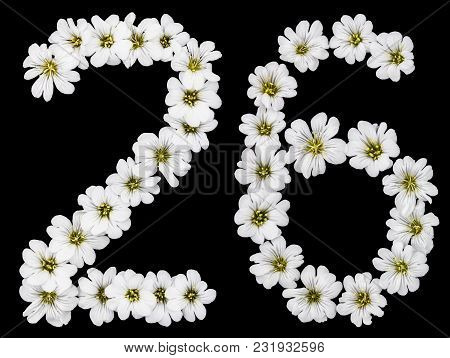 Arabic Numeral 26, Twenty Six, Twenty, Two, Six, From White Flowers Of Cerastium Tomentosum, Isolate