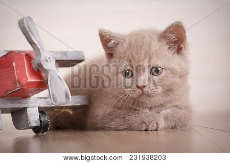 Home, Peace, Love Concept - Kitty Lies Near The Toy Plane. Young Cat Pilot.