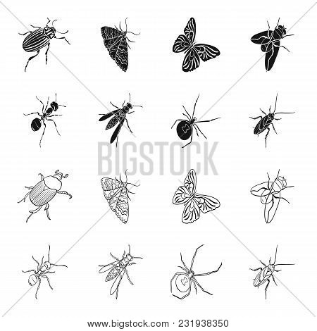 An Insect Arthropod, An Osa, A Spider, A Cockroach. Insects Set Collection Icons In Black, Outline S