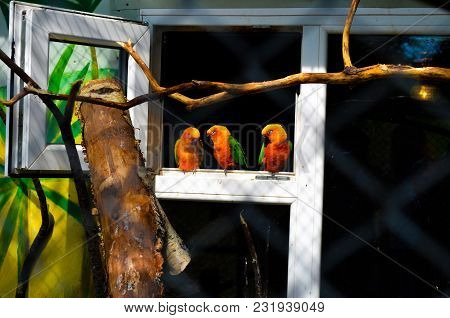 Three Parrot Lovebird Sitting On A Perch And Sleep At The Zoo