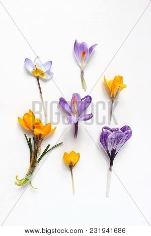 Spring, Easter Floral Composition. Yellow And Violet Crocuses Flowers On White Wooden Background, St