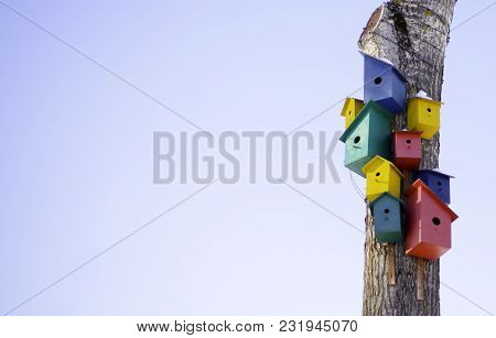 Right On The Background Of The Blue Sky. Many Colorful Houses For Birds On The Tree: Bird Commune, T