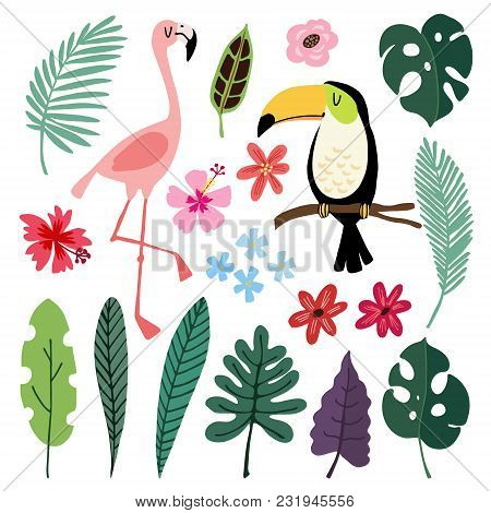 Summer Tropical Graphic Elements. Toucan And Flamingo Birds. Jungle Floral Illustrations, Palm, Mons
