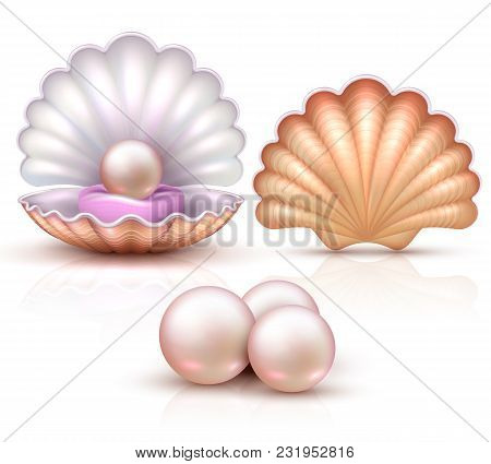 Opened And Closed Seashells With Pearls Isolated. Shellfish Vector Illustration For Beauty And Luxur