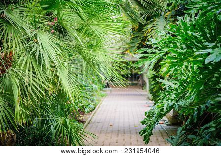 Inside Of A Palm House - Glasshouse - Winter Garden. Path