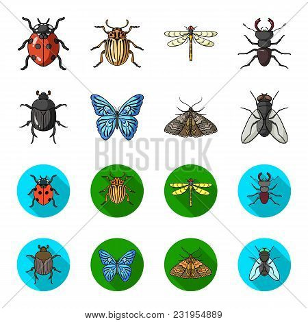 Wrecker, Parasite, Nature, Butterfly .insects Set Collection Icons In Cartoon, Flat Style Vector Sym
