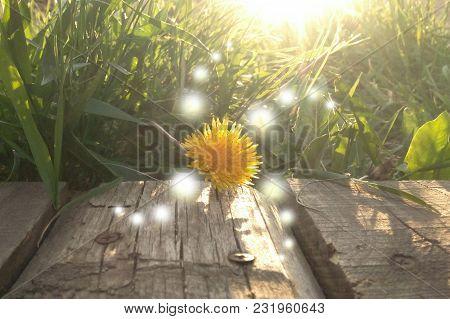 Balloons Patterns Of Light On The Dandelion Sunlight  Prana
