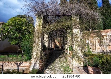 Pathway Among Hedge And Vines In Generalife