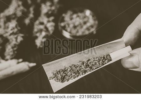 The Man Twists The Jamb With Marijuana On The Background Of Cones Of Flowers Of Hemp And Grinder, Th