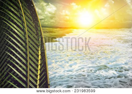 Coconut Leaf And Sea Beach With Sunlight, Summer Concept