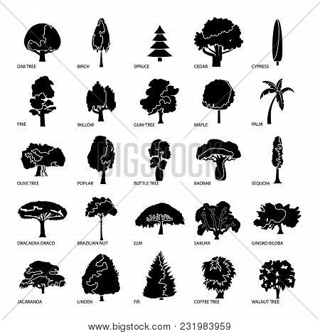 Tree Types Icons Set. Simple Illustration Of 25 Tree Types Vector Icons For Web