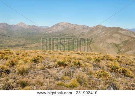 Spear Grass Plants Growing On Barren Hills Above Awatere Valley In New Zealand