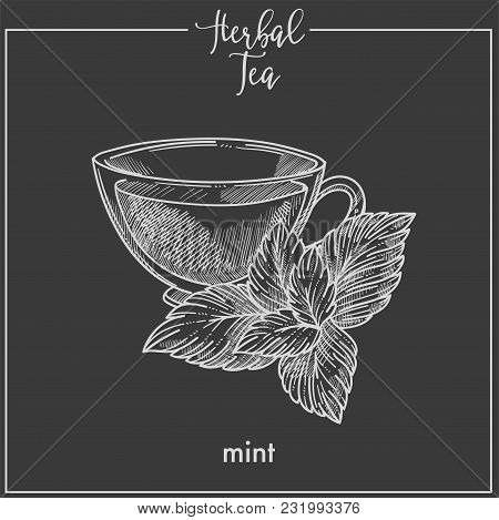 Hot Herbal Tea With Fresh Mint In Transparent Cup. Aromatic And Healthy Hot Beverage With Pleasant T