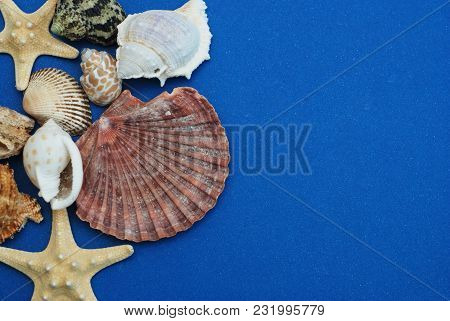 Scallop Shell And Starfish Over Deep Blue Background. Close-up View. Summer And Holliday Concept.
