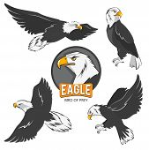 Collection of cartoon eagles. Flying birds isolate on white. Eagle animal flying, american predatory bird. Vector illustration poster