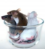 Few mice trying to get out of a cup poster