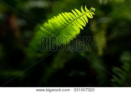 Beautiful Green Fern Selective Focus Background And Texture