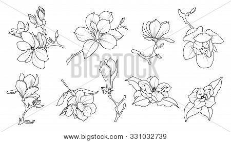 Magnolia Flowers Line Art Set. Tattoo Design. Decorative Flowering Plants. Vector Illustration