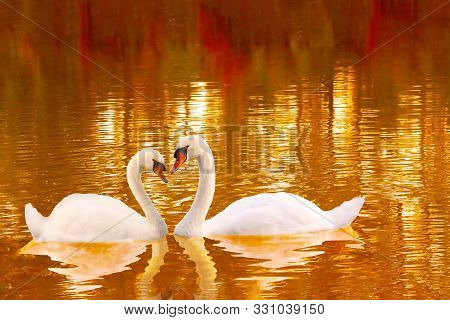 A Loving Couple Of White Swans With Heart Shaped Necks. Two White Swans On The Lake Surface In Autum