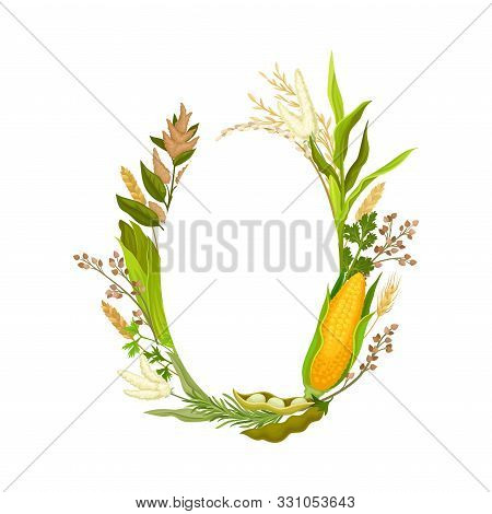 Oval Frame Of Different Stalks And Ears Of Corn. Vector Illustration.