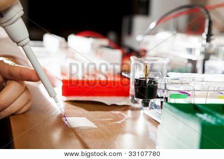 Sample preparation for DNA electrophoresis