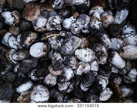 Raw Organic Gourmet Mushroom Assortment In A Pile