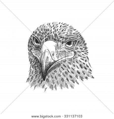 The Saker Falcon Falco Cherrug , Eagle Black And White Vector Illustration. Hand Drawn Sketch Drawin