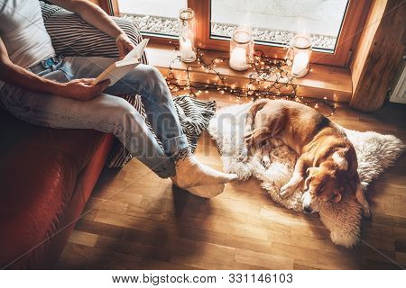 Man Reading Book On The Cozy Couch Near Slipping His Beagle Dog On Sheepskin In Cozy Home Atmosphere