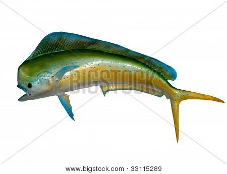 Mounted Dolphin Fish
