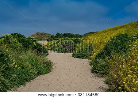Kehoe Beach Trail To The Ocean  In The Spring At Point Reyes National Seashore, Marin County, Usa,