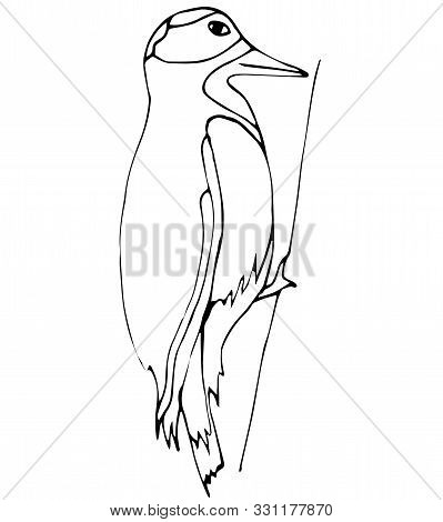 Woodpecker, Winter Bird Isolated On A White Background. Coloring. Vector. Graphic Christmas Decor.