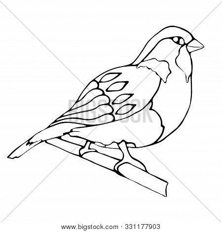 Sparrow, Winter Bird Isolated On A White Background. Coloring. Vector. Graphic Christmas Decor.