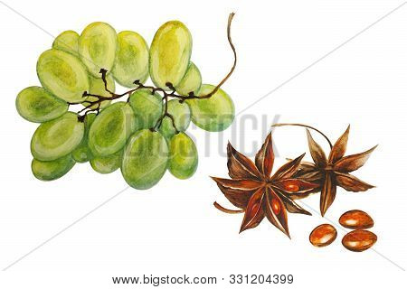 Brush Grapes And Badyan (illicium Verum), Dry Brown Star Anise Fruit, Watercolor Illustration, Isola