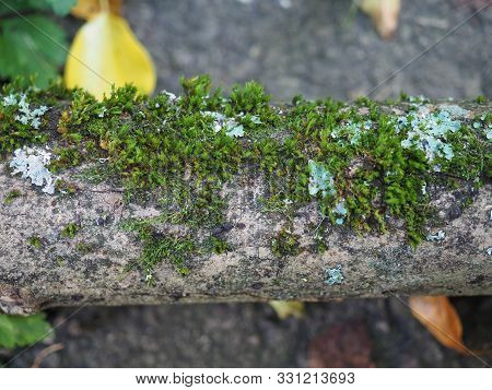 Moss Plant Growing On Trunk