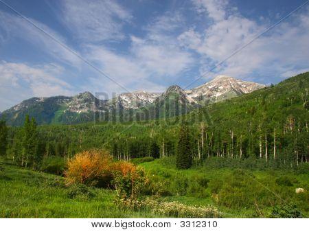 Mountain Splender