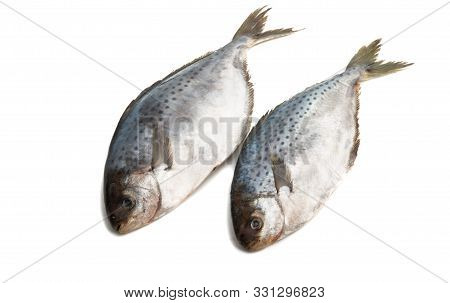 Butterfish Cooking Seafood Isolated On White Background