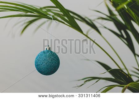 Alternative Christmas Tree Palm Plant With Christmas Baubles For The Festive Season In Summer For Th