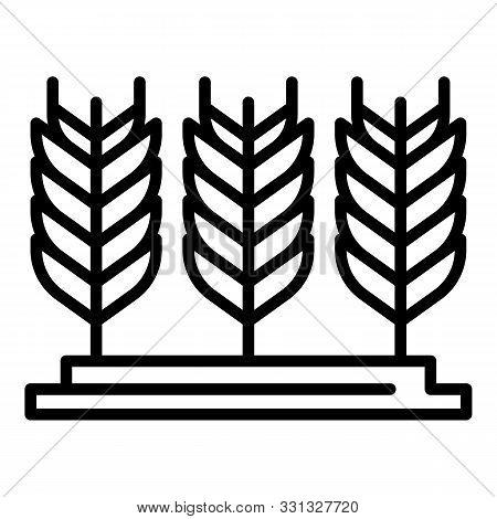 Farm Wheat Plantation Icon. Outline Farm Wheat Plantation Vector Icon For Web Design Isolated On Whi