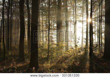 Autumn forest in fog sunrise. Nature landscape Nature background Nature background Natural environment in autumn woods Nature Sunbeams sunshine in forest Outdoor autumnal trees at sunrise morning Nature background Branch and trees Nature Sun rays in woods