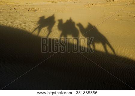 Shadow Camel Riding