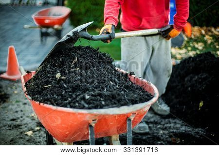 Man Using A Shovel To Put Mulch Inside A Red Wheelbarrow As Part Of A Landscaping Project