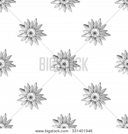 Lotus With Black And White Monotone As Seamless Wallpaper On White Background