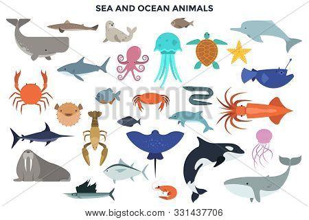 Collection Of Sea And Ocean Animals - Marine Mammals, Reptiles, Fish, Molluscs, Crustaceans. Set Of