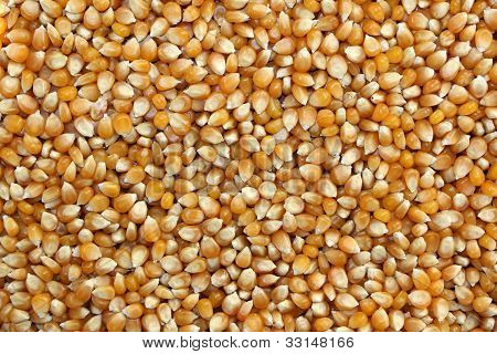 Grains Of Corn