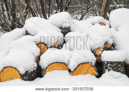 poster of Row of logs lying on a ground covered with fresh thin snow cover.Snow-covered logs lie on the ground. Winter.