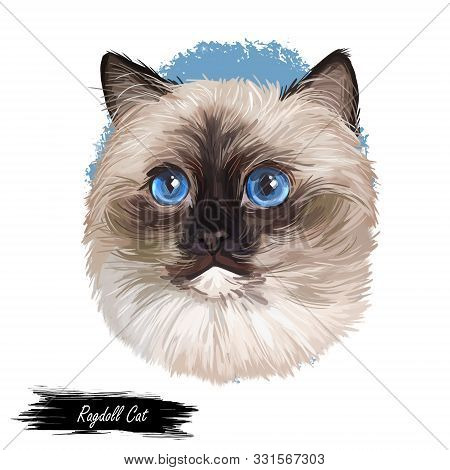 Ragdoll Cat cat breed with color point coat and blue eyes. Digital art illustration of pussy kitten portrait, feline food cover design, veterinary vet clinic label. Fluffy domestic pet, t-shirt print. poster