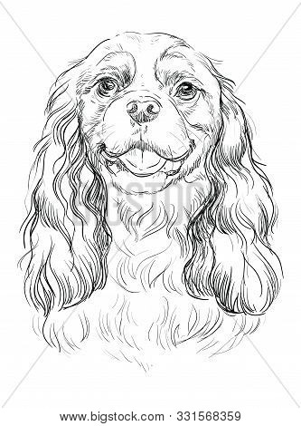 Cavalier King Charles Spaniel Vector Hand Drawing Illustration In Black Color Isolated On White Back