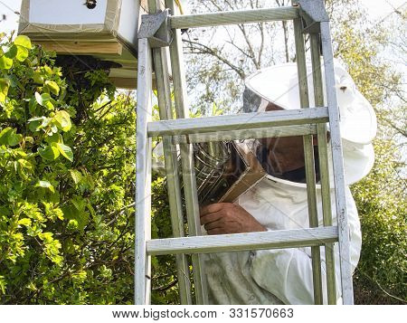 Portrait Of Beekeeper In Protective Clothing Holding Smoker On Scale Near Hedge While Standing At Ap
