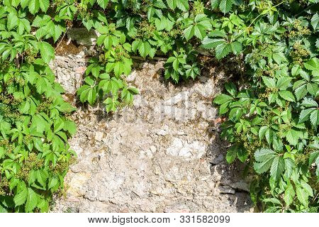 Abstract Background Wiht Stone Wall And Ivy Twigs.